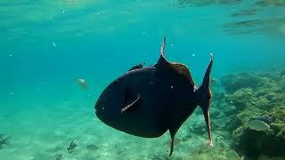 ЕГИПЕТ 2019 Пляж отеля Али Баба и подводный мир Hurghada Ali Baba Beach and Underwater World
