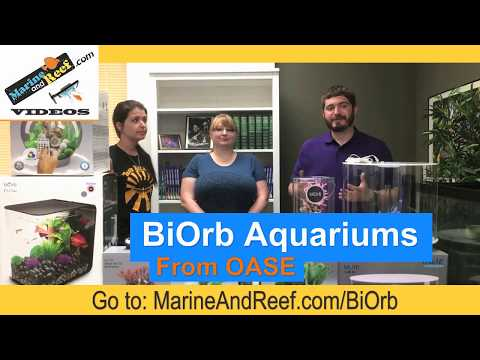 BiOrb Aquarium Overview From MarineAndReef.com