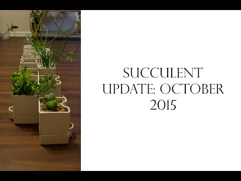 Succulent Update: October 2015