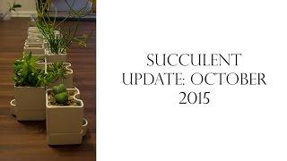 Succulent Update: October 2015
