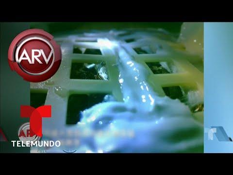 Brotan las primeras semillas de algodón en la luna | Al Rojo Vivo | Telemundo