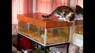 funny cat play with fish / Le chat joue avec le poisson thumbnail