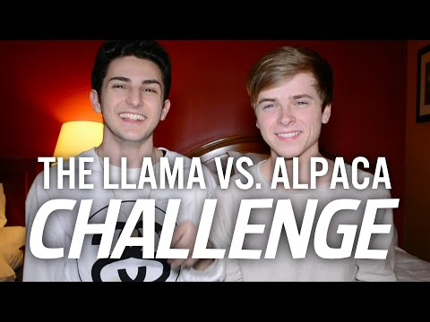 THE LLAMA VS. ALPACA CHALLENGE (with Luke Korns)