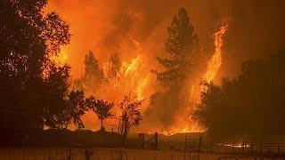 Schlimme Waldbrände in Kalifornien: Mammut-Bäume bedroht