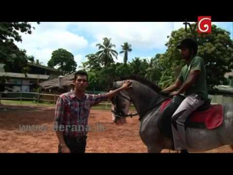 The Other Side - Premadasa Riding School