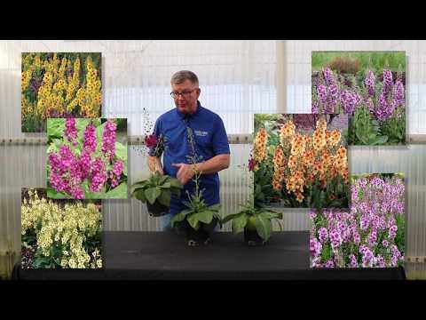 Terra Nova's New Flowers For 2020/2021
