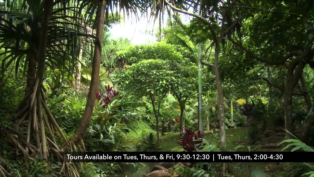 Princeville Botanical Garden Spotlight   KVIC TV3 [Activity] [Tour] [Nature]