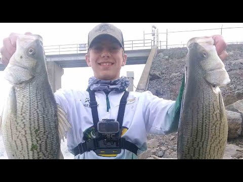 Catching Hybrids, Smallmouth, and Walleye at the John Sevier Dam!! Day 1Part 1 (Holston River)