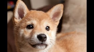 Cute Dogs and Cats Compilation 2018 #25