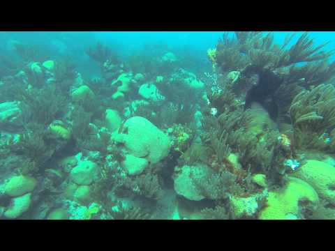 Dive 4B   Bermuda 2013