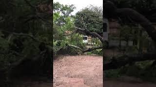 """Árvore tomba no """"estacionamento"""" que fica ao lado da Caixa Econômica Federal"""