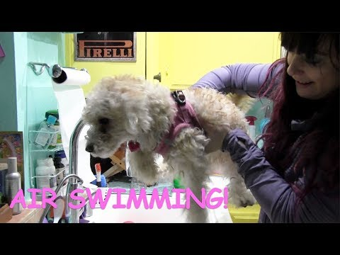 MY DOG AIR SWIMMING (SO FUNNY)