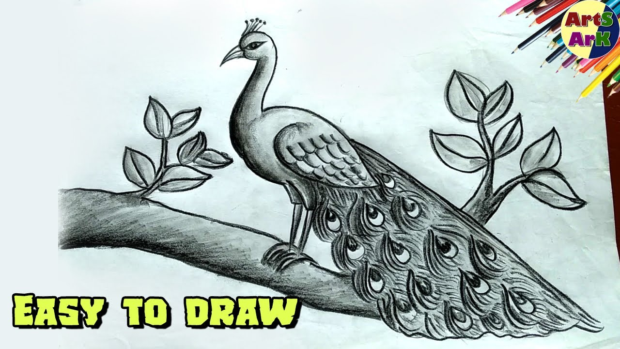 Easy Peacock Drawing With Pencil Only ময র আ ক র সবচ য সহজ পদ ধত Youtube
