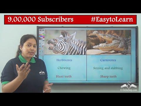 Types Of Teeth In Different Animals - Herbivorous, Carnivorous And Omnivorous