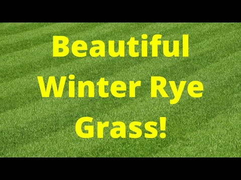 How Grow Winter Rye Grass-Overseeding-For A Perfect Lawn!