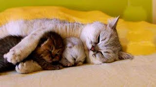 ADORABLE Mother Cats and  Newborn Kitten    Funny Pets Video Compilation
