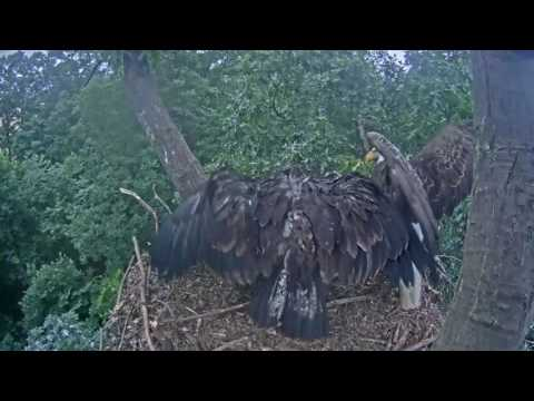 Hanover Eagles - It's a Fledge!! - 06-06-17