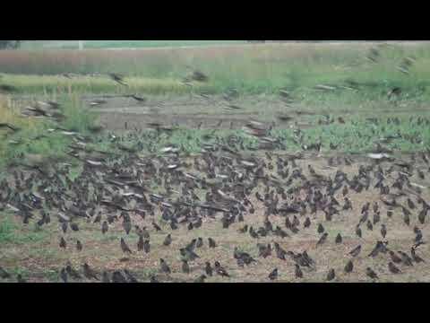 Amazing! Bird Sounds-amazing bird-Beautiful Exotic Birds with Relaxing Music and Bird Sounds
