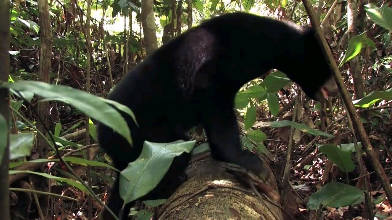 Wisata Beruang Madu Kwlph Di Balikpapan Youtube