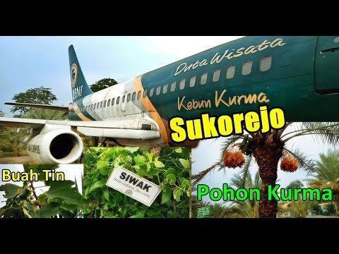 wisata-kebun-kurma-sukorejo-pasuruan-jawa-timur-indonesia