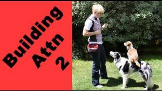 Building Attention-game 2- Clicker Dog Training