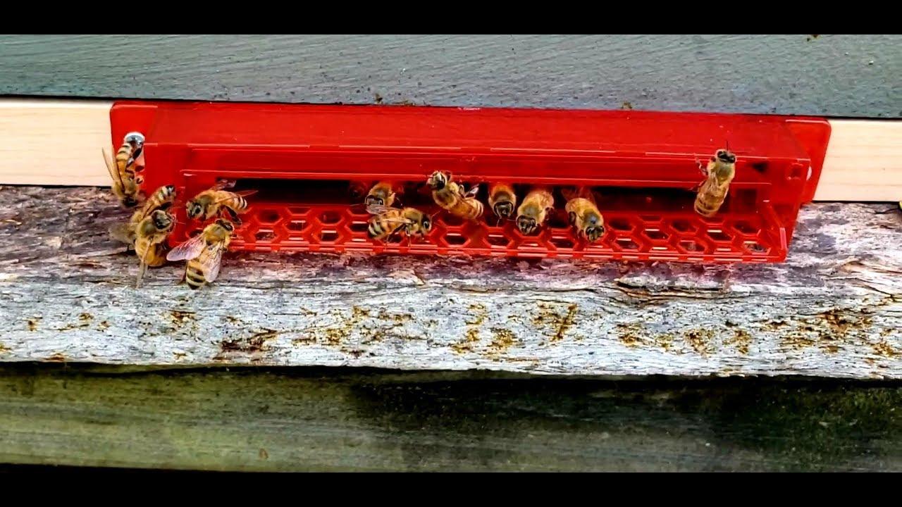 Guardian Beehive Entrance