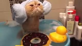 Котик принимает ванну прикол ржака