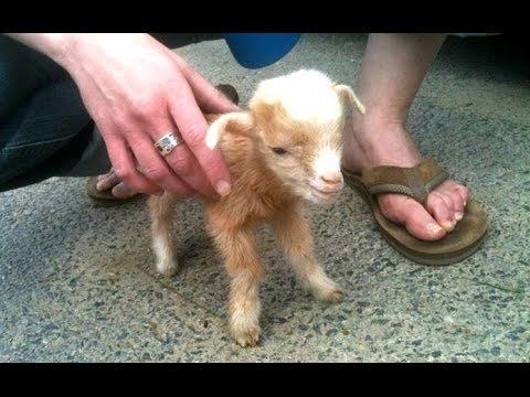 коза — новые прикольные фото, анекдоты, видео, посты на
