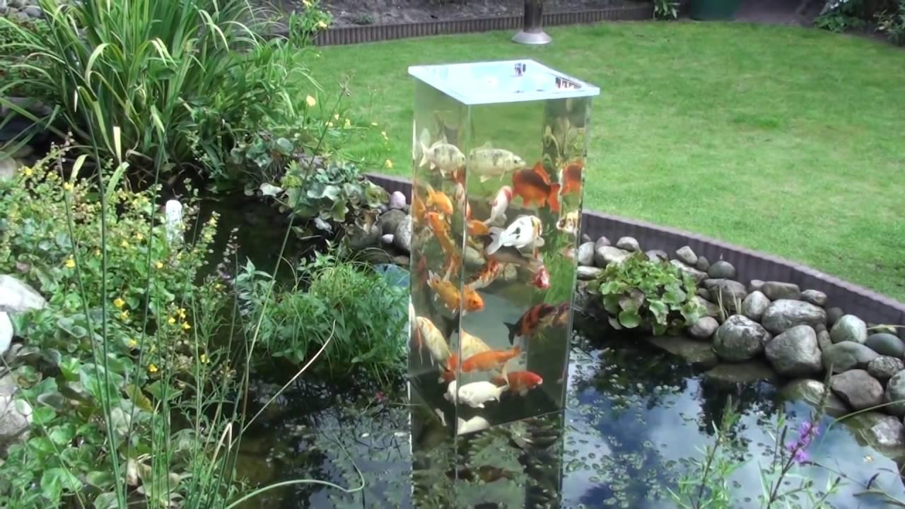 Mein koi aussichtsturm im gartenteich bei tag 4 youtube for Aquarium fische im gartenteich