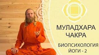 БИОПСИХОЛОГИЯ ЙОГИ-2. МУЛАДХАРА ЧАКРА.