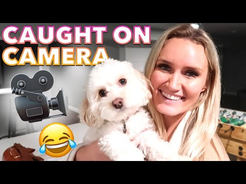 FUNNY MOMENTS CAUGHT ON CAMERA 😂 WORLD'S CUTEST DOG MOMENTS 🐶 BEST DOG BREEDS 🐕 HAPPY PUPPY LOVE
