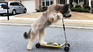 PETS RIDING HUMAN TOYS ★ Ultimate Compilation (HD) [Funny Pets]