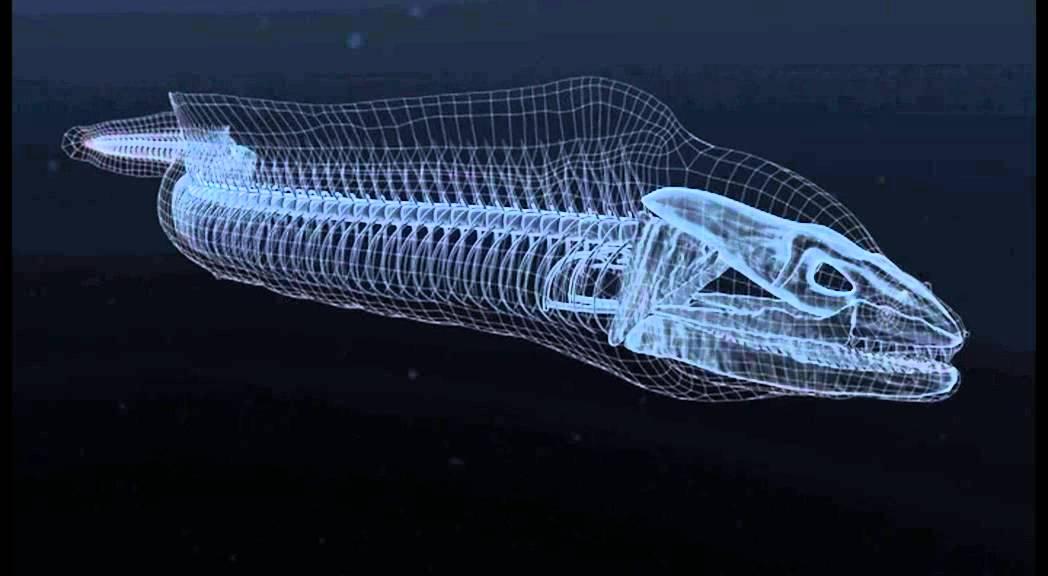 Moray Eels Alien Empire - Example of CGI - YouTube