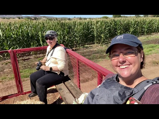 Mortimer Farms Pumpkin Patch - Phoenix With Kids