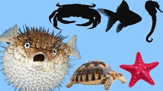GUESS THE NAMES OF ANIMALS. Learn See Animals For Kids