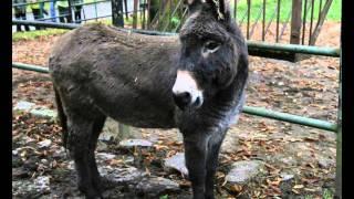 Zwierzęta - odgłosy zwierząt dla dzieci - Animal Sounds