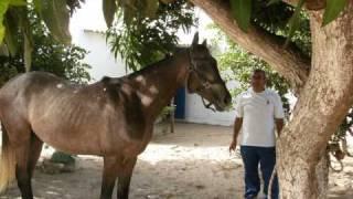 Ecuries Ghassan Hajar à Niaga (Lac rose) Les Champions