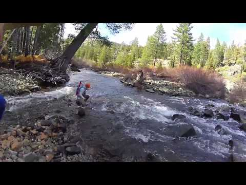 Fordyce Creek Fly Fishing - Just The Fish