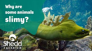 Sea Curious: Why Are Some Animals Slimy? Special Guest Kel Mitchell