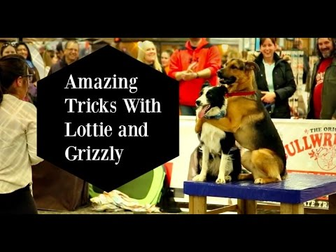 Amazing Dog Tricks with Lottie the Border Collie & Grizzly the GSD- Hugging Dogs