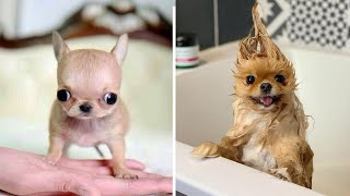 Cute baby animals Videos Compilation cutest moment of the animals 2020 - Soo Cute! #20