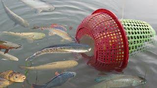 क्रिएटिव गर्ल मछली की एक बड़ी मछली पकड़ने के लिए प्लास्टिक की बोतल और टोकरी का उपयोग कर जाल बनाओnull