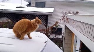 Cat failing to jump cat  - The best funniest cats -  Reverse video