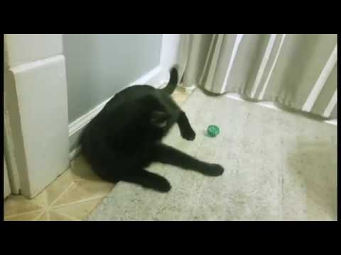 A Promotional Video for Pet Education