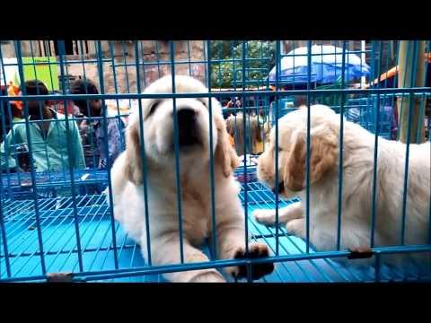 Galiff Street Pet Market Kolkata