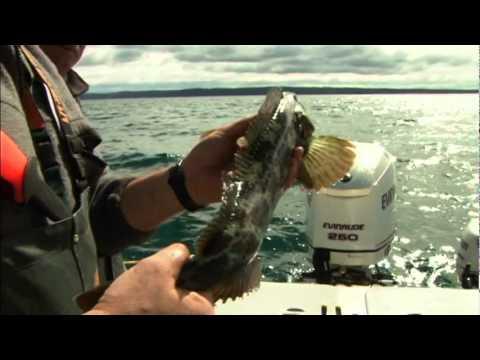 Western Sportfishing with Lee Horsley: San Juan Islands