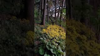 울릉도 행남등대 가는 꽃밭길