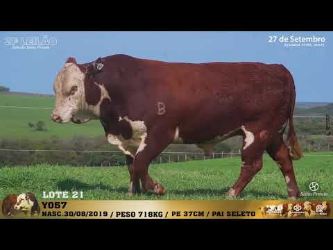 LOTE 021