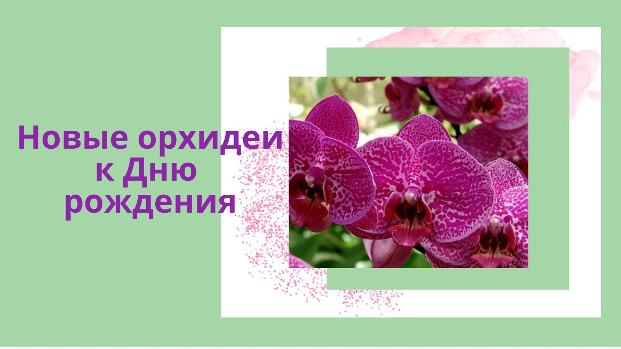 #орхидеи    Орхидеи ко дню рождения