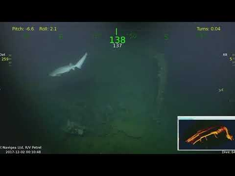 Deep sea explorers stunned as rare 15ft SHARK emerges from WW2 shipwreck